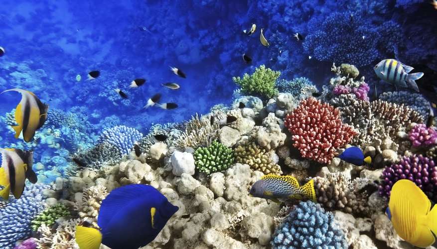The changing pH of salt water in the oceans is affecting ecologies, including coral reefs.