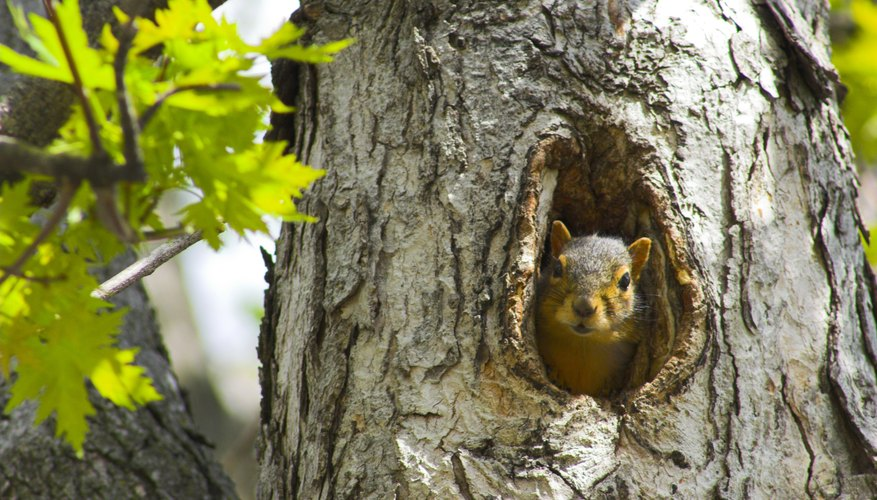 Squirrels keep a wary eye out for threats.