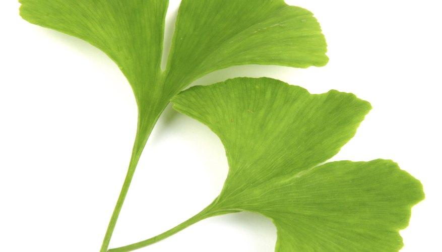 Ginko Biloba can assist as an herbal remedy.