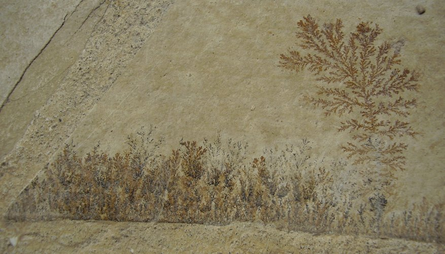 Plants degrade and leave an imprint fossil of where they once were.