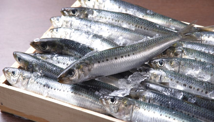 Small box filled with sardines.