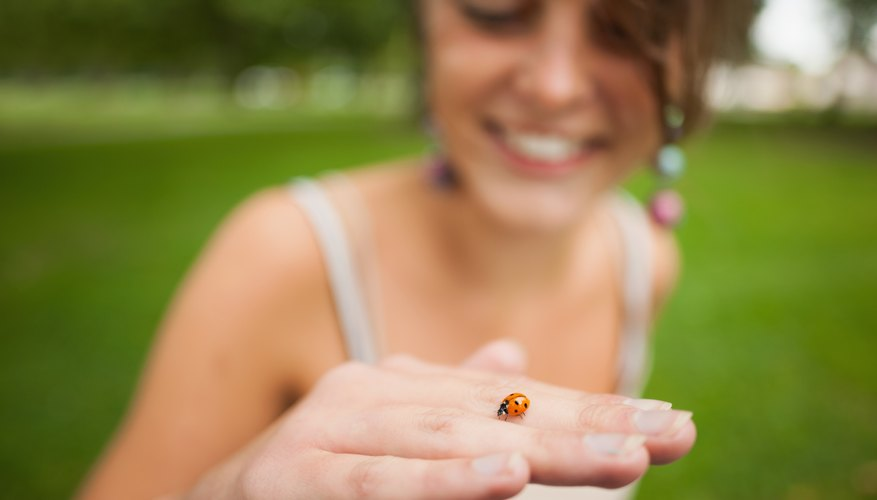 You share the planet with about 5,000 ladybug species.