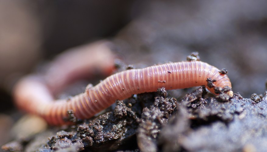 earthworm on soil