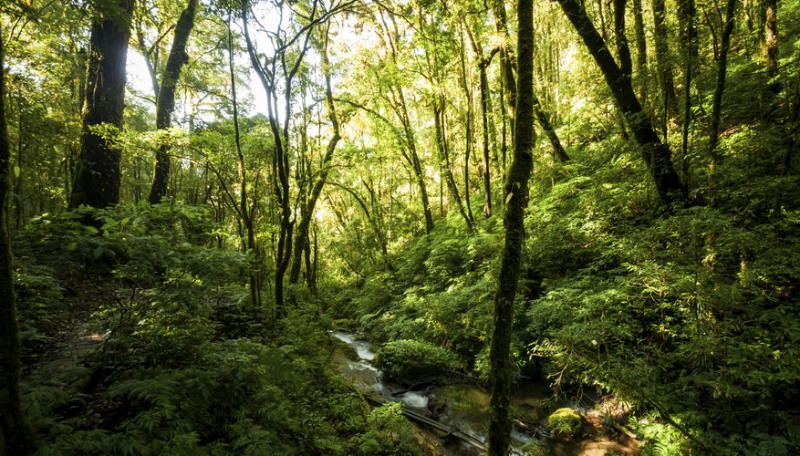 Sunlight shines through a forest canopy.