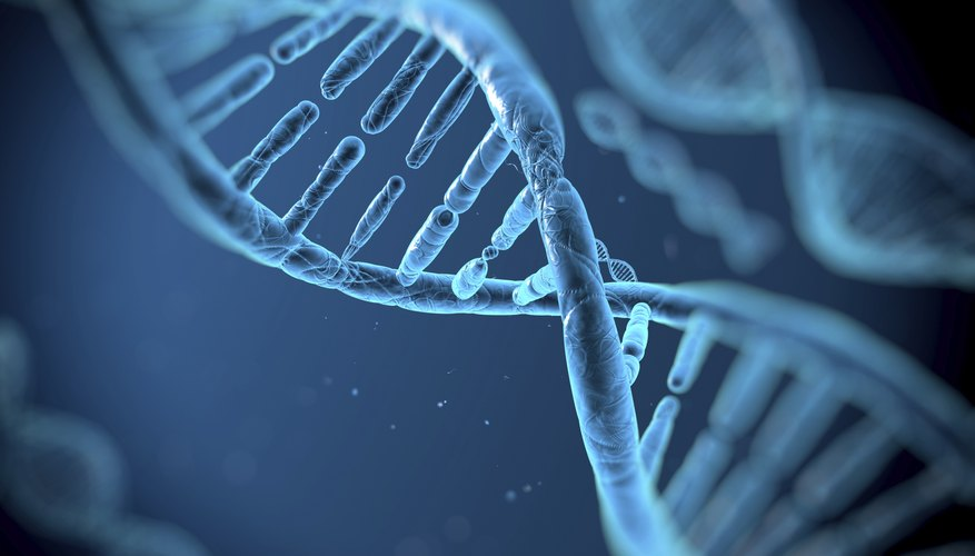 DNA contains purines and pyrimidines.