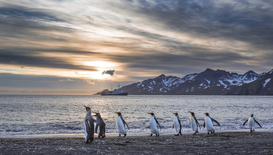 Image of South Georgia with penguins walking on beach.