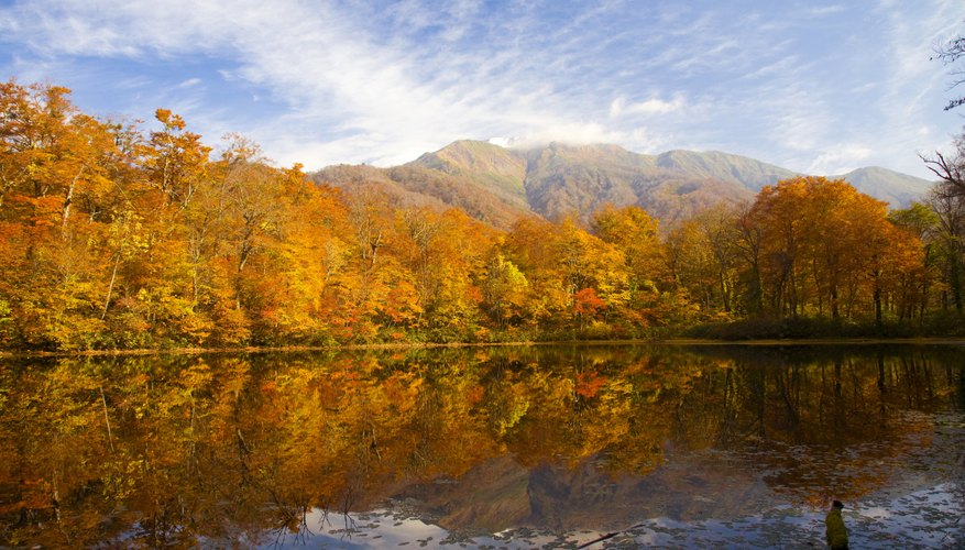 A deciduous forest surrounding a lake in Japan during autumn