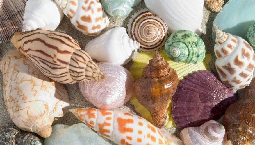 Beautiful assortment of seashells