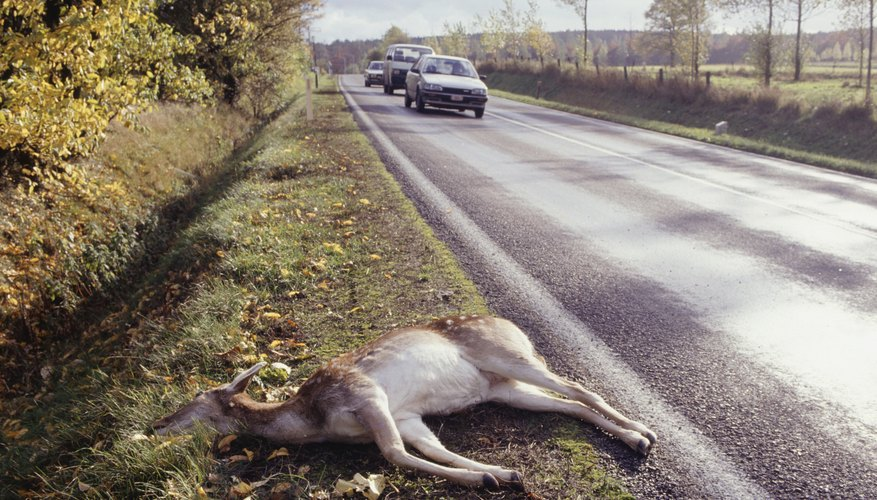 Does Car Insurance Cover Hitting A Deer