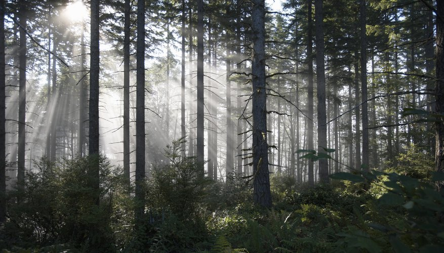 Energy enters most ecosystems as sunlight.