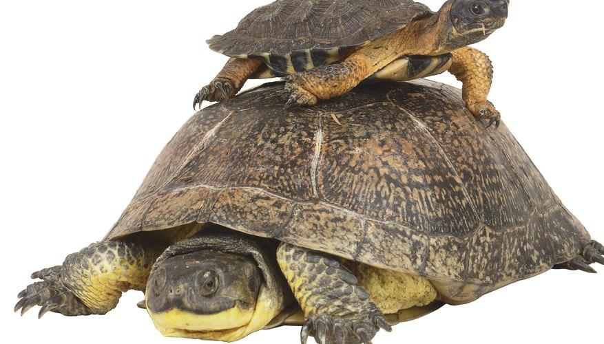 Partes del cuerpo de una tortuga.