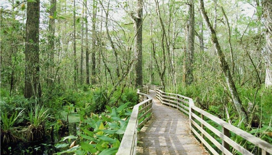 Bridge over swamp in forest