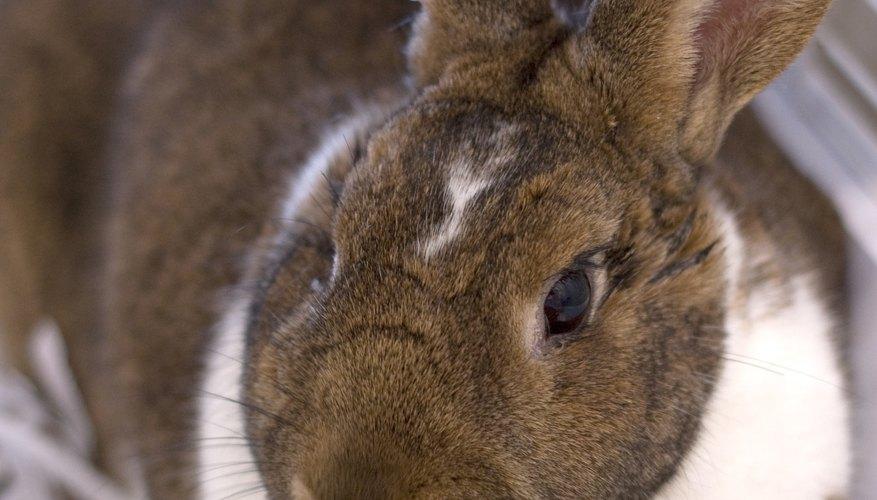 Puedes construir una jaula para conejos en pocas horas.
