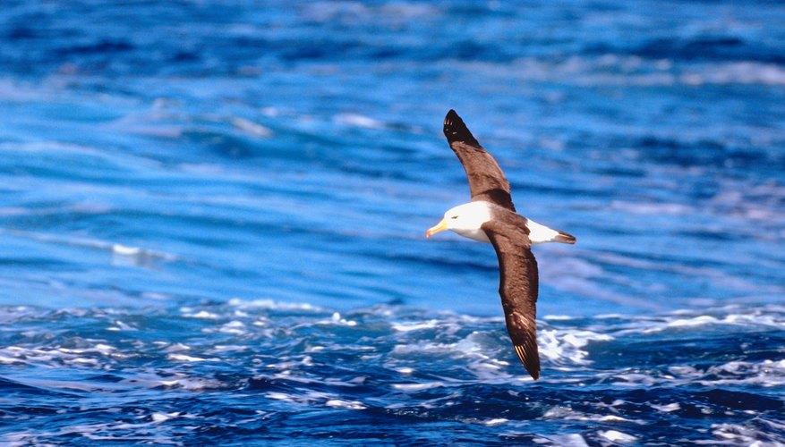 Muchos animales en la Antártida están en peligro de extinción.