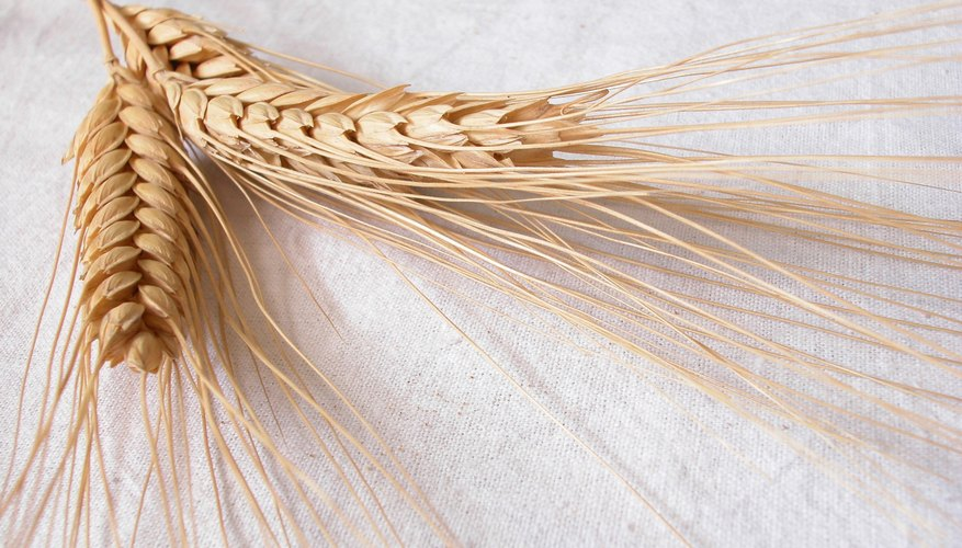 Growing wheat involves a multistep process after harvesting.