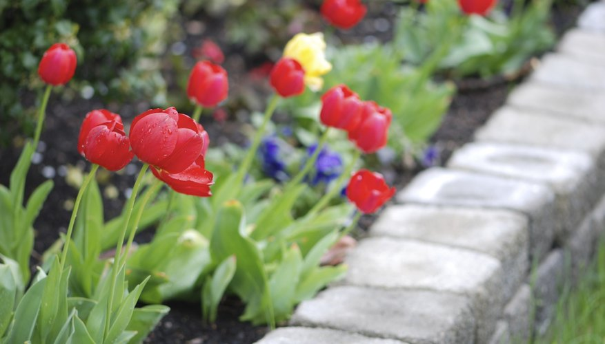 Growing flowers in raised beds allows you to see and smell them close up.