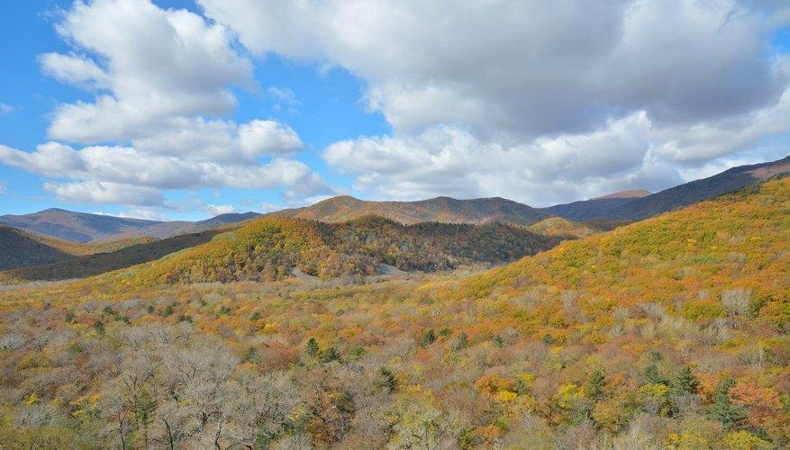 Taiga landscape in autumn