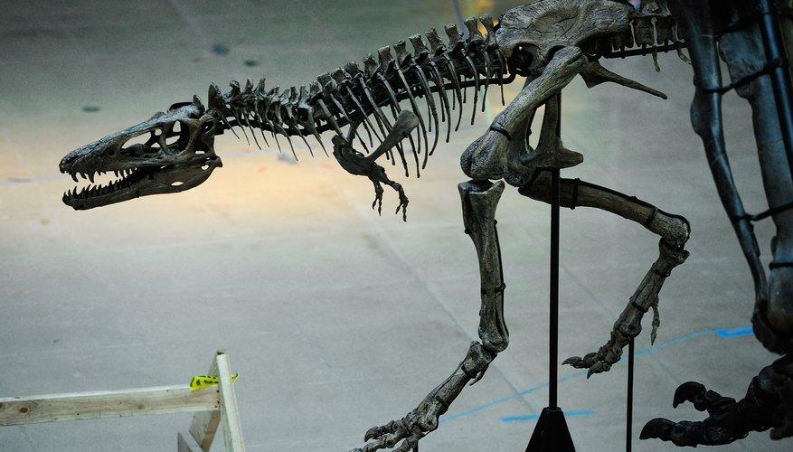 Usa la imagen del esqueleto de un dinosaurio mientras trabajas.