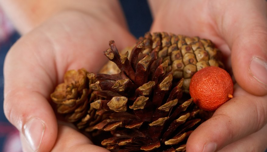 Natural objects such as pinecones feature funky textures for toddlers to explore.