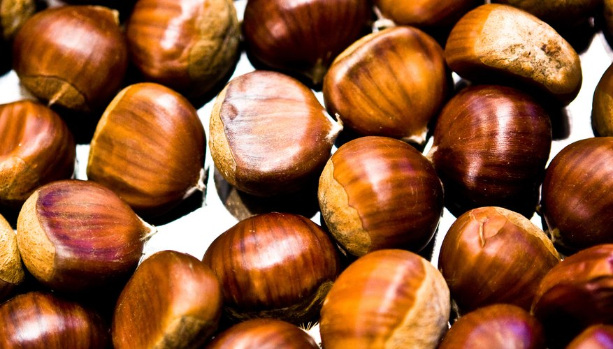 Do not confuse edible chestnuts with the poisonous horse chestnuts and the California buckeye.