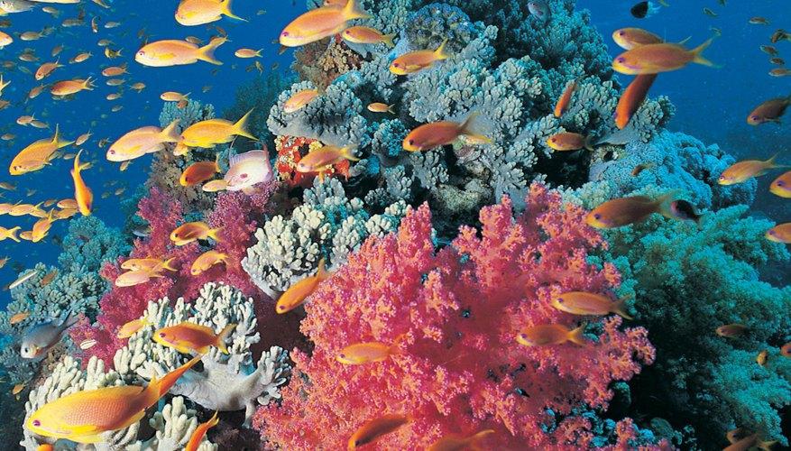 Image result for arrecifes imagenes con imagenes que no esten sujetar a derechos del autor