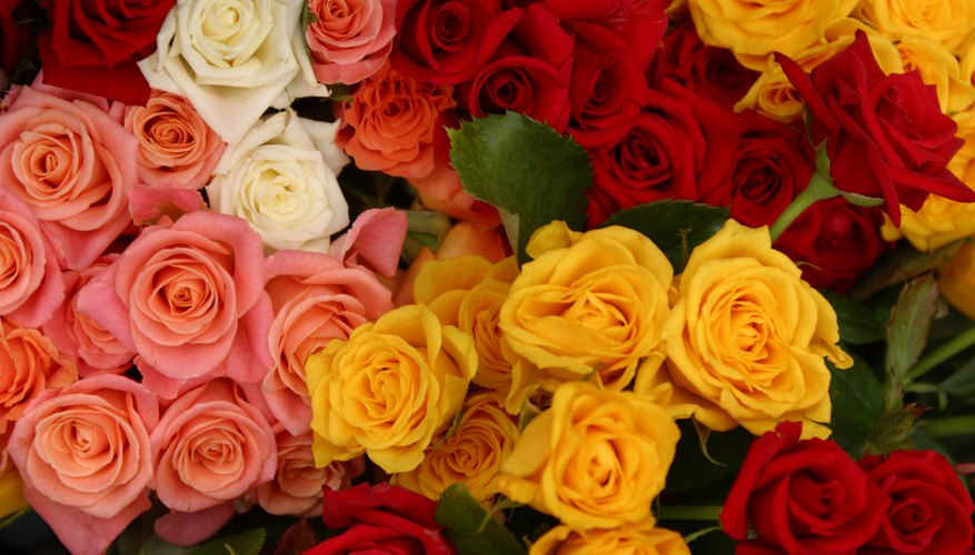 Think about the meaning of the color when you give roses