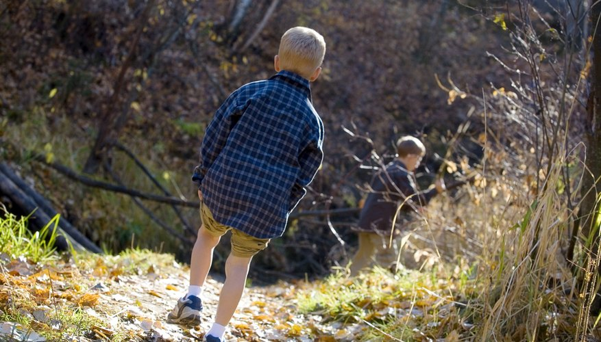 Boys taking a hike on a nature trail.