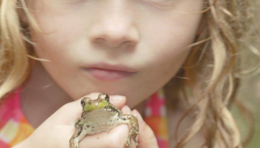 Usa manualidades para aprender más de las ranas en el aula.
