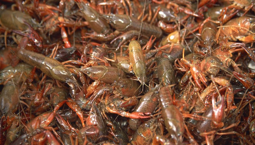 How Do Crayfish Get Oxygen Sciencing