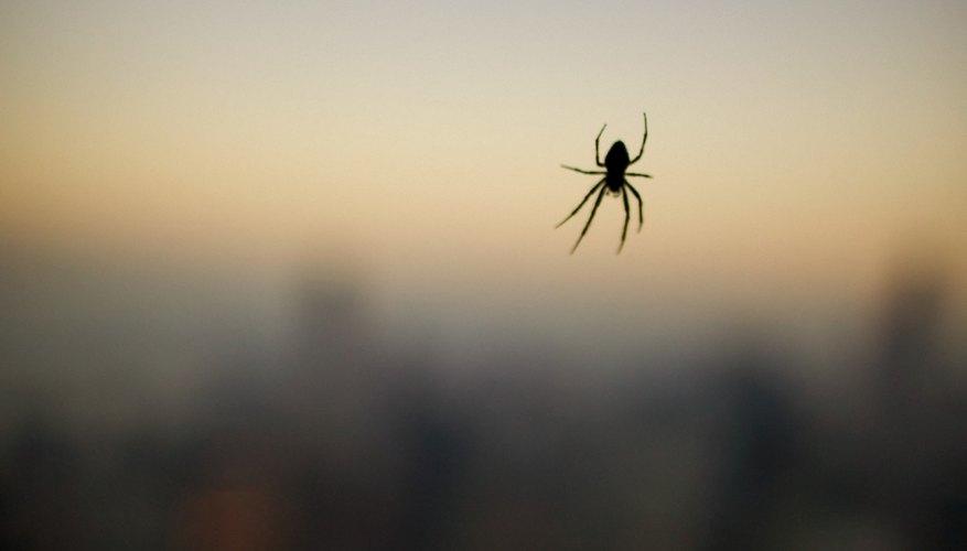 Solo puedes distinguir las arañas cuando aprendiste sus características.