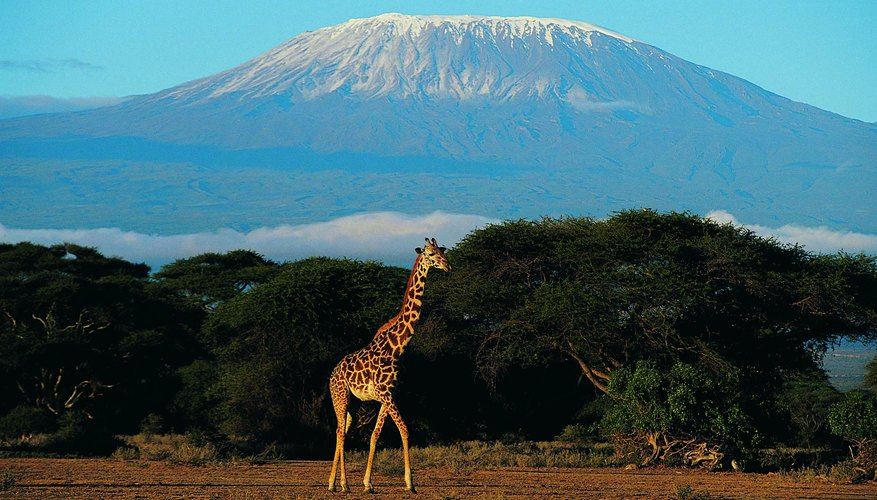 Step outside your usual routine with a visit to Mount Kilimanjaro.