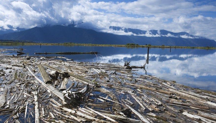 La mayoría de las maderas flotan; pero otras no.