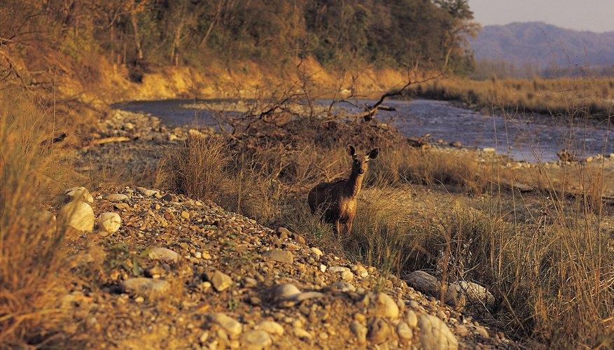 Los mejores lugares para cazar ciervos incluyen etiquetas fáciles de conseguir y excelentes potenciales de trofeos.