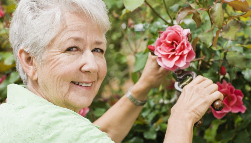 Seniors should consider security, maintenance and general lifestyle when deciding whether to own or rent.