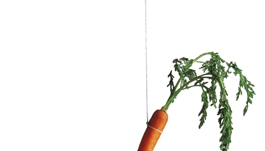 Carrot hanging from string