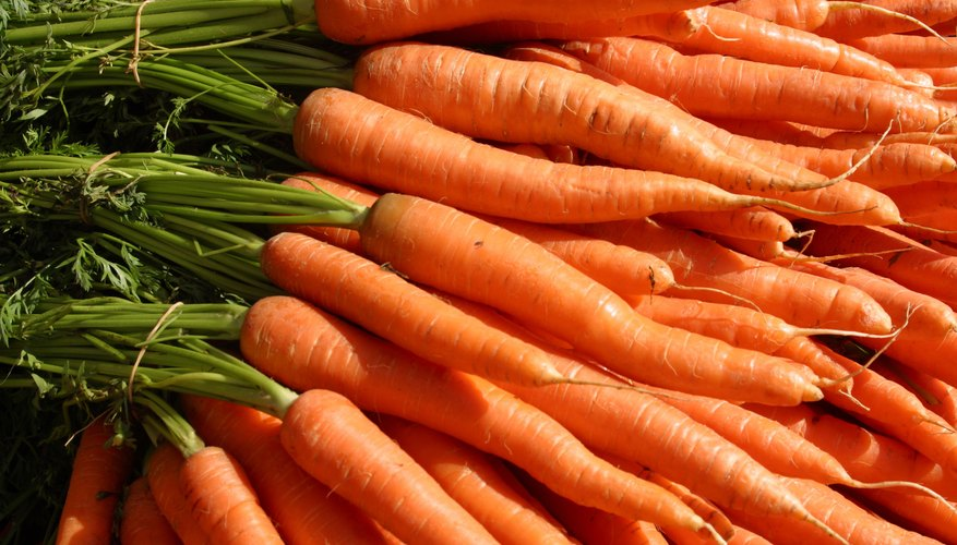 Carrots are well-known root vegetables.