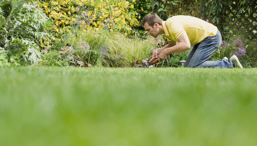 Wide shot of a gardener at work on his lawn