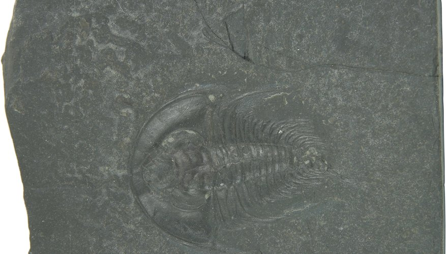 A marine organism imprint fossil.