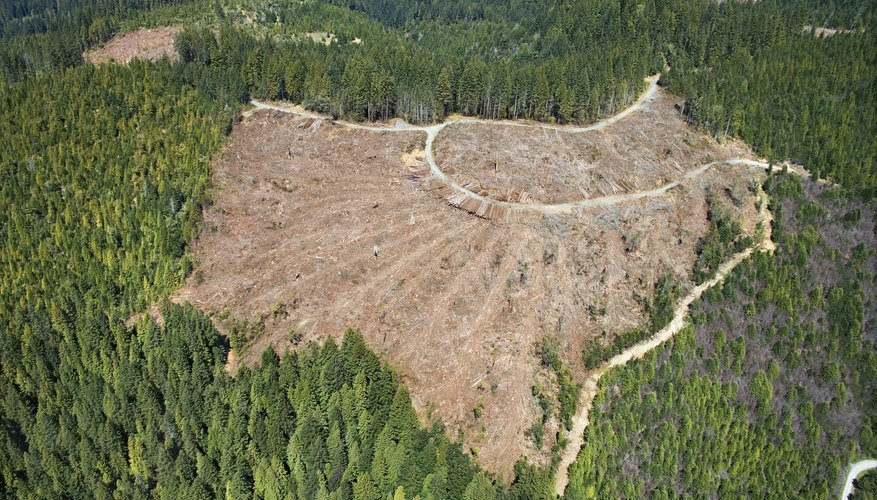 Clear-cutting and logging large swaths of rain forest greatly increase soil erosion.