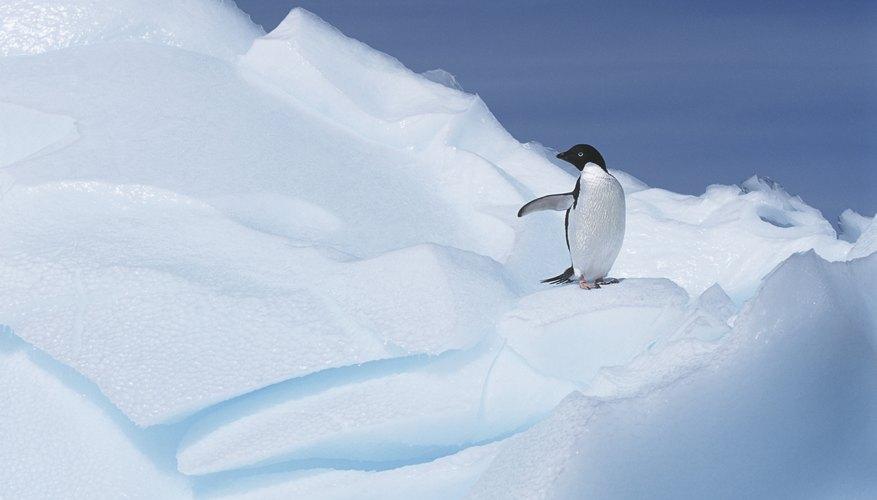 A penguin on a glacier.