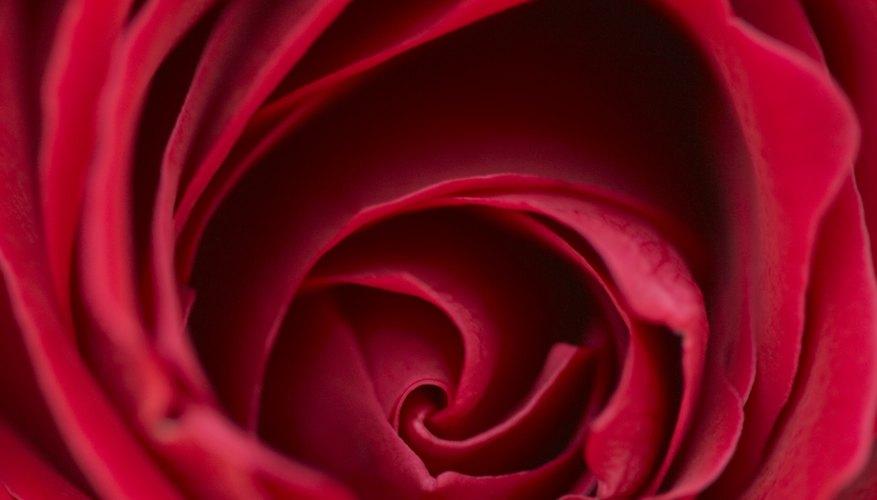 Las rosas crean un sentido de paz y belleza en una pintura.