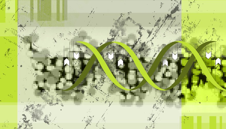 Several types of errors can creep into DNA.