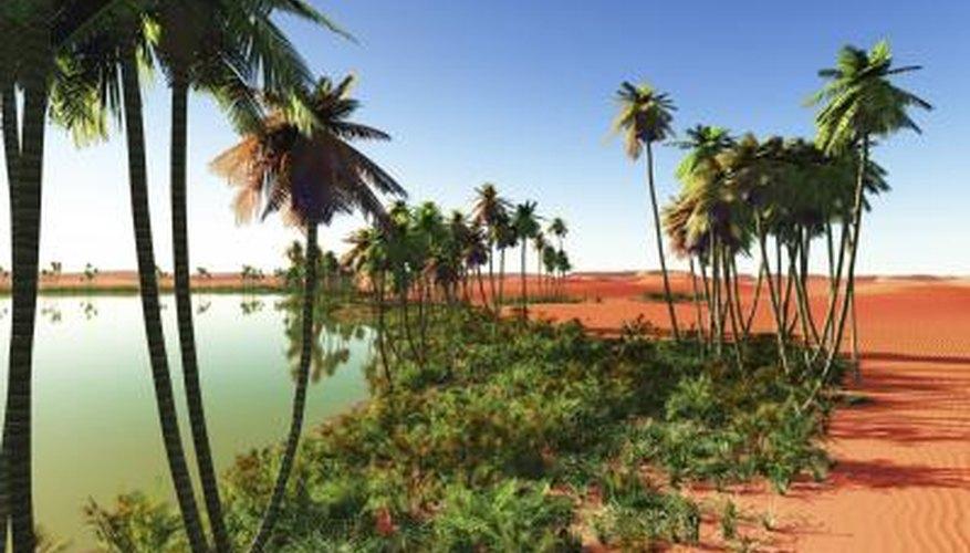 Las palmas datileras son algunas de las plantas en el desierto del Sahara.
