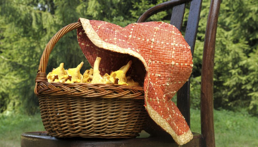 A basket filled with chantarelles covered with a sun hat.