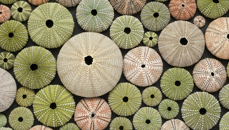 Colorful collection of Sea Urchin shells