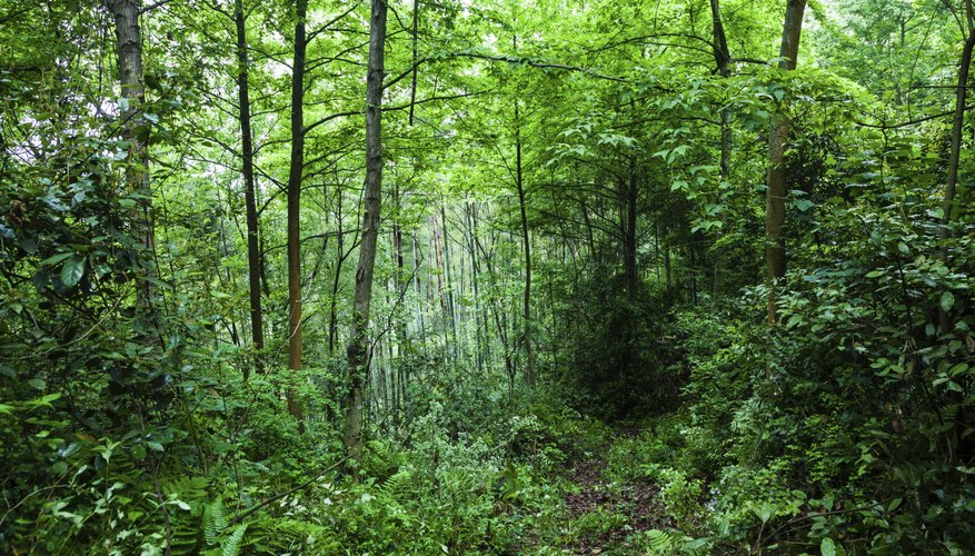 an essay on clear cutting of forests