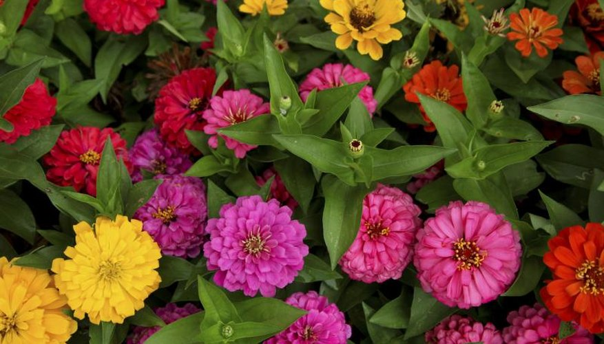Many annuals deliver constant color from spring until frost.