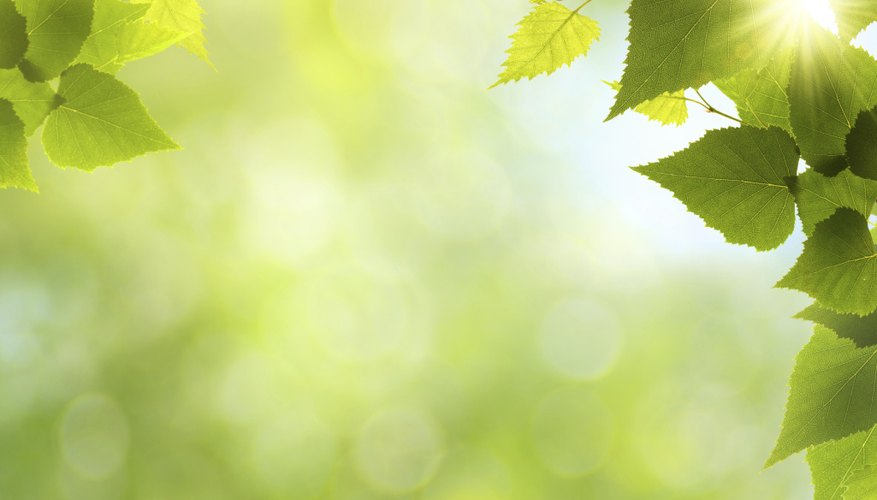 Sun shines on leafs