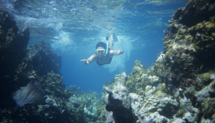 Marine biology camps for teens