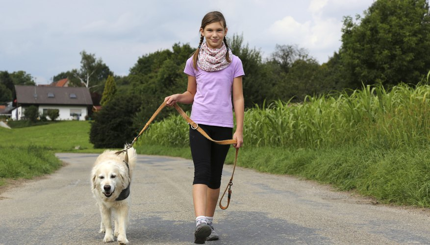 Ten-year-olds can get paid to walk dogs.
